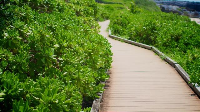 Kapalua Coastal Trail | nic vargus